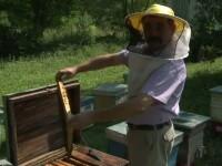De ce vom avea mai putina miere in acest an. Autoritatile ar fi folosit un pesticid interzis in toate statele UE