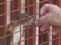VIDEO. Rezidenții din Queens, New York, terorizați de atacuri ale veverițelor