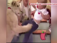 Un leu s-a repezit in direct la o fetita, in timpul unei emisiuni tv. Scenele cumplite care au urmat. VIDEO