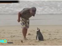 Un pescar l-a salvat de la moarte, iar in fiecare an pinguinul face un gest impresionant pentru batranul de 71 de ani VIDEO
