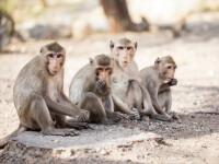 12 maimuțe au murit în urma unui atac de cord. Ce le-a speriat