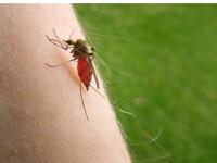 Crește numărul cazurilor de infecţie cu virusul West Nile. Unde s-a înregistrat virusul