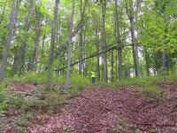 Pădurar din Mureș, sechestrat și agresat de hoții de lemne