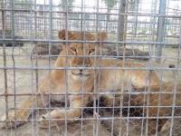 Cum sunt chinuite zeci de animale în Chiajna, din ambiţia edililor. Explicaţia oficialilor