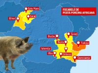 Belgia vrea măsuri urgente pentru a stopa pesta porcină. Cele mai afectate țări la nivel european