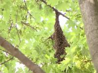 18 copii, atacați de un roi de viespi într-un parc din Bârlad. Localnicii dau vina pe autorități