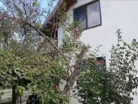 Liliacul a înflorit în curtea unei femei din Argeș, la câțiva km de zona în care a căzut prima ninsoare