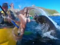 Canotor lovit cu o caracatiţă peste faţă de o focă furioasă