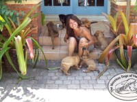 """100 de câini, salvați de o femeie din calea uraganului Dorian. """"E o nebunie aici"""""""