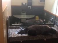 Urs descoperit într-o cameră de hotel. Cum a fost alungat