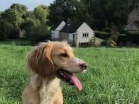 Șocul prin care a trecut un britanic după ce a ieșit cu câinele la plimbare