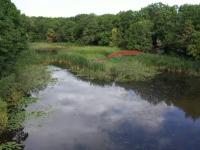 Celebrul Lac cu Nuferi, care l-a inspirat pe Eminescu, zace în paragină. Ce spun autoritățile