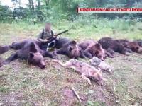 Sute de urși, în pericol să fie vânați la liber. Decizia luată de senatori