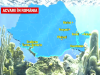 Planuri pentru dezvoltarea acvariilor din România, aflate momentan în paragină