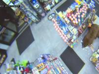 Urșii, clienți obișnuiți ai unei benzinării și ai unui supermarket. Reacția oamenilor. VIDEO