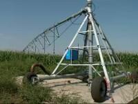 Va fi criză de porumb din cauza secetei. Soluția găsită de un fermier din Constanța
