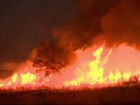 """Haos în SUA. Incendiile de vegetație sunt cele mai mari înregistrate vreodată: """"E ca un butoi cu pulbere"""""""