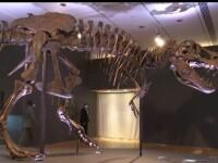 Scheletul unui dinozaur uriaș, scos la licitație. Care este suma de pornire