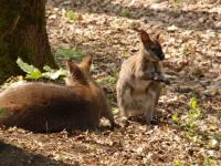 Cum a fost posibil carnagiul de la Zoo Timişoara. Doar pasărea emu a scăpat de câini