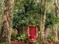 O casă care arată exact ca a lui Winnie de Pluș poate fi închiriată cu 95 de lire pe noapte. Unde este situată. GALERIE FOTO