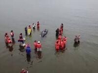Un pui de orcă, salvat de voluntari. Operațiunea a durat câteva ore