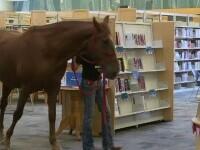 Angajații unei librării au adoptat un cal pe nume Hank. Animalul face boacăne, dar copiii îl adoră