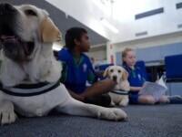 Roxy și Quinton, labradorii care ajută copiii să facă față momentelor dificile. Sunt primiți chiar și în sălile de judecată