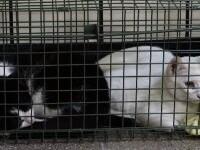Peste o sută de animale au fost sterilizate de voluntari, în Baia Mare. Inițiativa este menită să stopeze abandonul