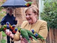 """Angela Merkel, """"atacată"""" de papagali în ultimele sale zile de mandat. """"Niciun animal sau cancelar nu a fost rănit"""""""