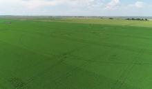 Agricultura la Centenar, partea I