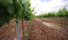 romania te iubesc, vinuri, viticultura, fonduri europene