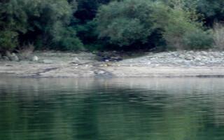 poluare pe Dunare