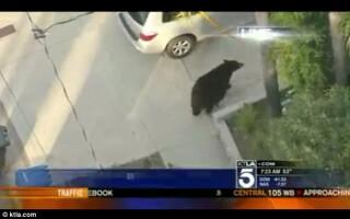 urs pe strada, California