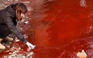 rauri poluate China