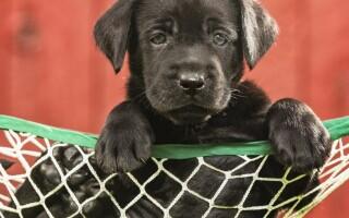 Cum a reușit un câine să alunge hoții care îi amenințau stăpânii