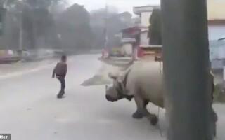 rinocer captura twitter