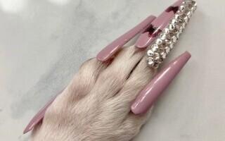 VIDEO. O femeie din SUA i-a pus unghii false căţeluşei sale. Cum arată animalul