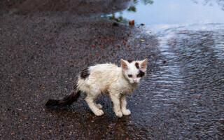 O adolescentă a aruncat o pisică de la balcon, în Bacău. Ce amendă a primit