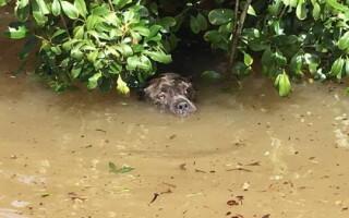 Caine la inundatiile din Louisiana