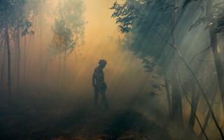 Un pompier se luptă cu flăcările, într-o pădure din sudul Portugaliei