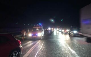 Urs accidentat mortal pe A1, în Sibiu