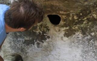 gaura paianjeni