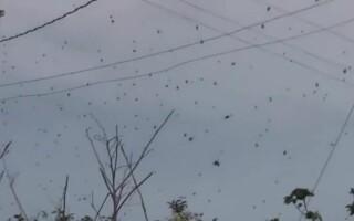 Ploaie de paianjeni