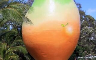 Mango-ul urias din Bowen