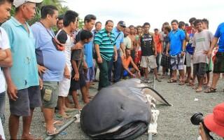 Rechin Filipine