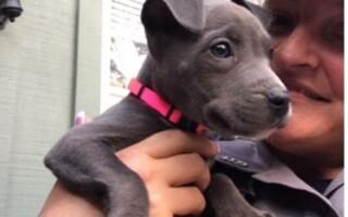 Câine adoptat