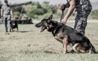 Armata indiană antrenează câini să detecteze bolnavii de COVID-19