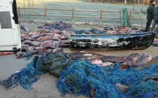 Trei români au golit de peşte un lac din Italia, folosind cabluri electrice