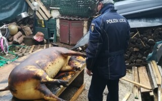 porc sacrificat italia