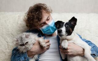 Câinii și pisicile vor fi testați pentru coronavirus. Țara care a luat această decizie